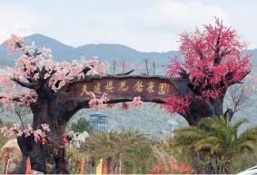 广州从化天适樱花悠乐园