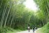 广州溪头村纯玩1日竹林徒步,拥抱大自然