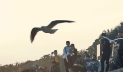 深圳湾公园万鸟齐飞,无比壮观!!!免费!!