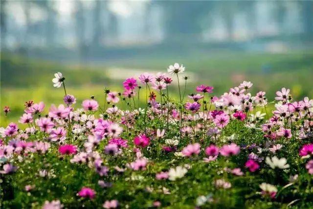 还有两天,梦里水乡百花园要许你一场花海盛宴!