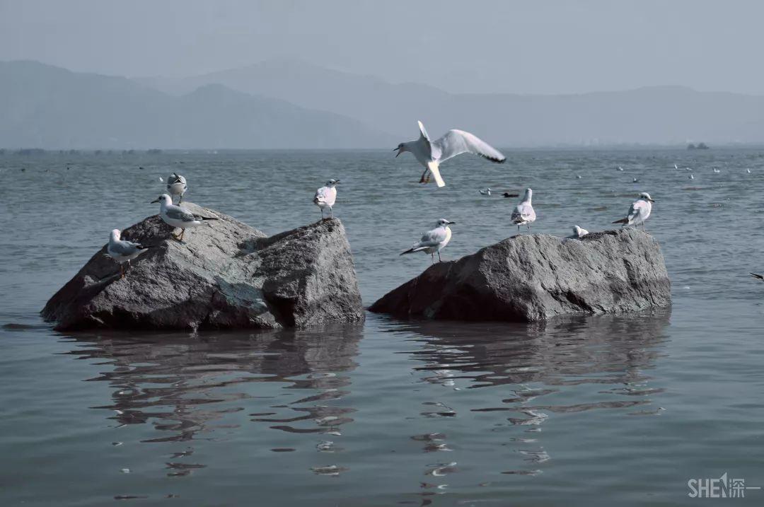"""震撼!深圳湾""""万鸟齐飞"""",场面太壮观!"""