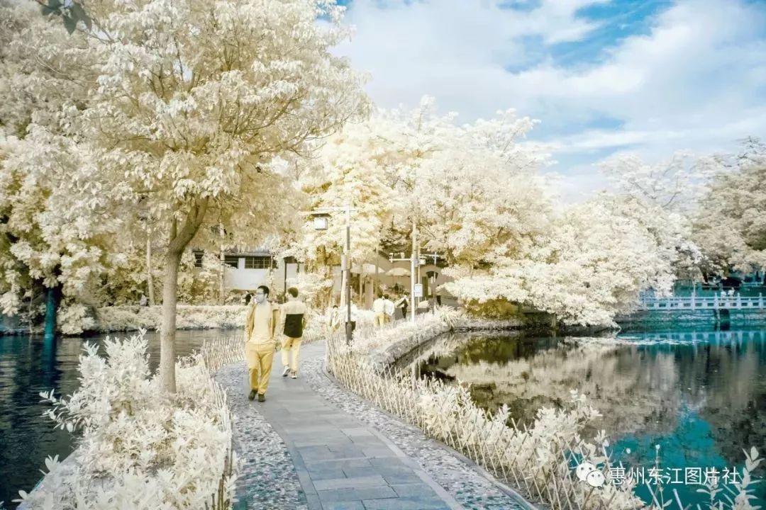 """惠州西湖的""""第一场雪"""",美爆了!!!"""